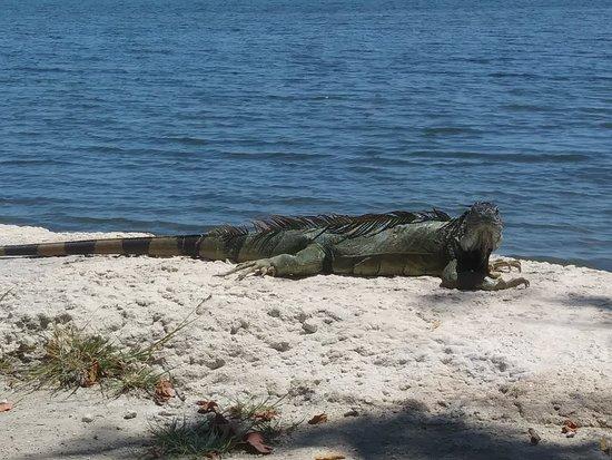 Boyd's Key West Campground 사진