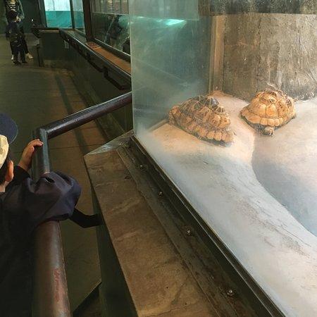 神戸市立王子動物園, photo3.jpg