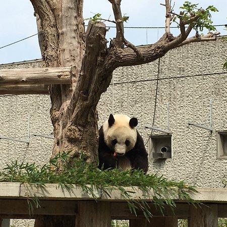 神戸市立王子動物園, photo5.jpg