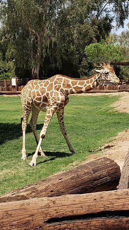 Litchfield Park, AZ: Wildlife World Zoo and Aquarium