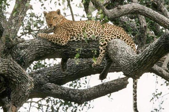 6-dagers Murchison Falls, Chimp...