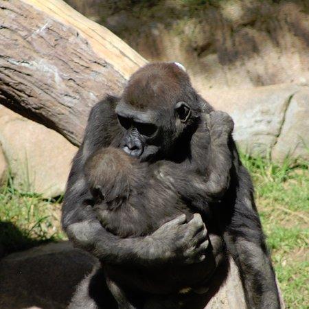 San Diego Zoo Safari Park: photo6.jpg