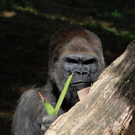 San Diego Zoo Safari Park: photo7.jpg