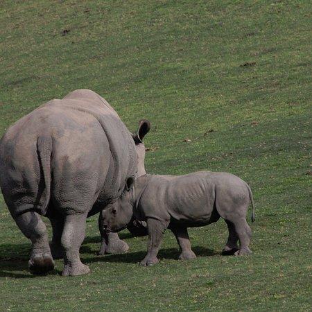 San Diego Zoo Safari Park: photo9.jpg