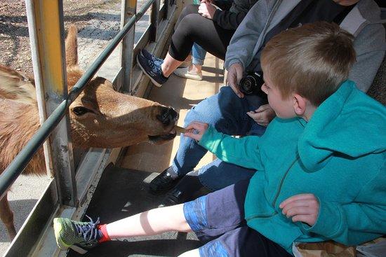 Wild Animal Safari: don't be afraid