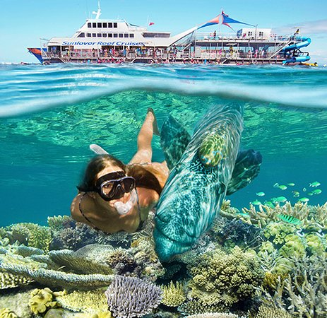 Cairns Region, Avustralya: Moore Reef Full Day Tour