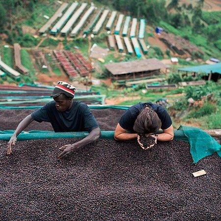 Constantia, Sydafrika: Nautral processed coffee from Burundi