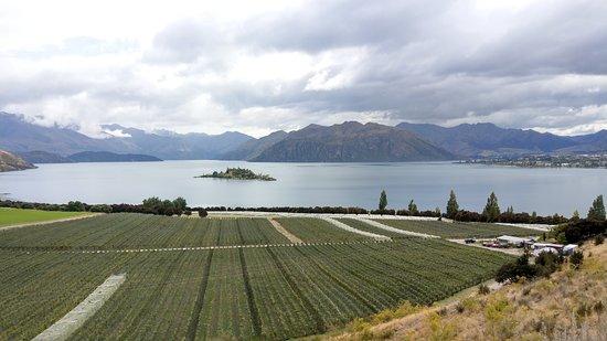 Rippon Vineyard: 湖景及葡萄園