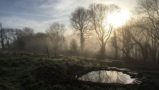 Newcastle Emlyn, UK: Misty morning view across the Wildlife Pond and the newly planted forest garden