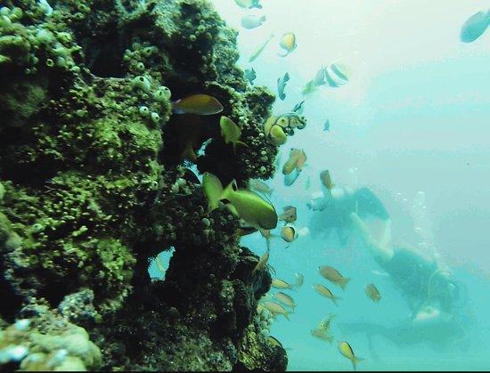 Received 10214912772960521 01 picture of manta - Manta dive gili air ...