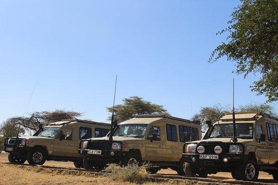 Cheetah Revolution Safaris