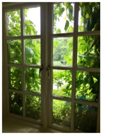 Macreddin Village, İrlanda: View from window