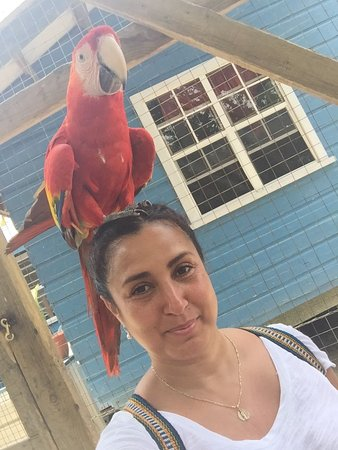 French Harbour, Honduras: Stunning birds! The Scarlet Macaw is the national bird of Honduras