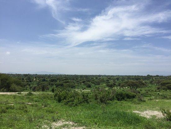 Tarangire National Park, Tanzania: landscape