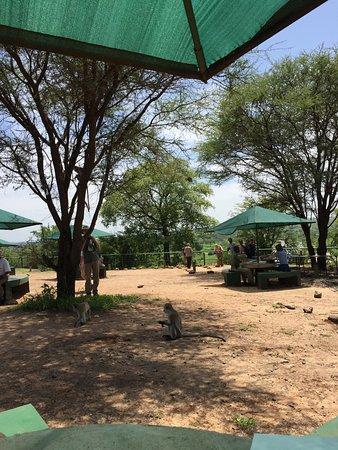 Tarangire National Park, Tanzania: picnic point