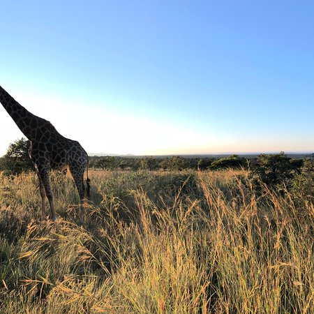Mabula Private Game Reserve, South Africa: photo0.jpg