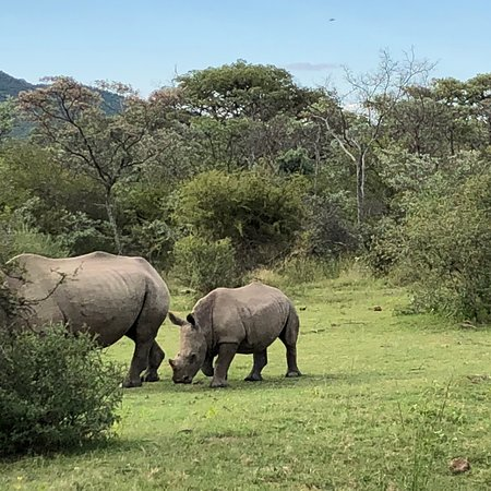 Mabula Private Game Reserve, South Africa: photo1.jpg