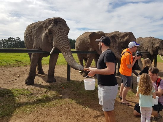 Knysna Elephant Park: 20180416_111852_large.jpg