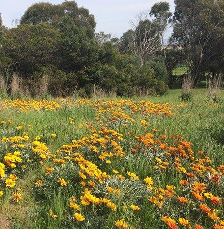 Menlo Park, Califórnia: Spring flowers