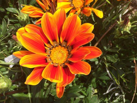 Menlo Park, Califórnia: Flower close up