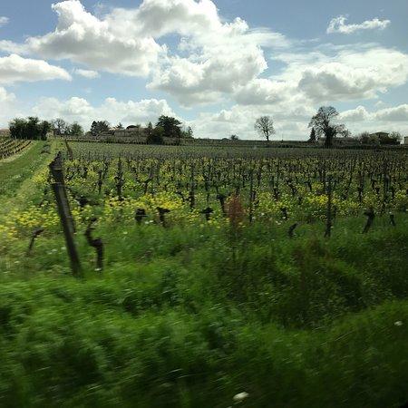 Ophorus Bordeaux Wine Day Tours: photo2.jpg