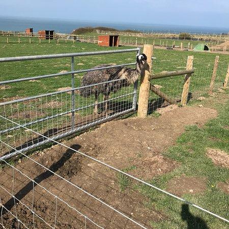Seals Playing Picture Of Cardigan Island Coastal Farm Park