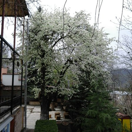 Boutique Hotel Casanova Inn: Blooming wild pear