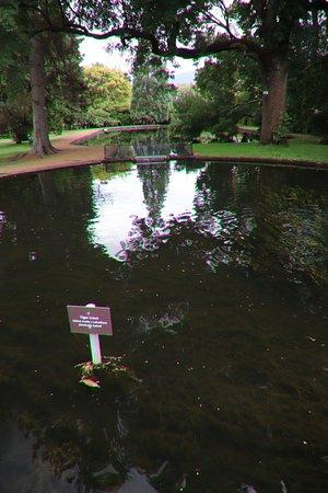 New Norfolk, Australien: A pond