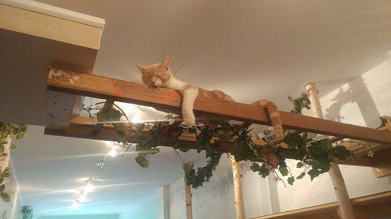 Eat, Purr, Love Cat Cafe