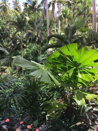 Glory Tours: Hunte's Gardens