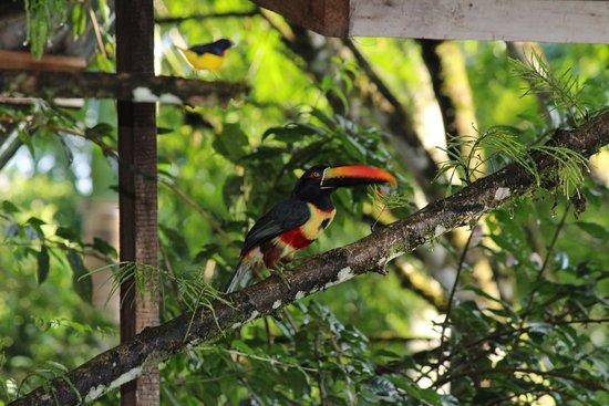 San Vito, Costa Rica: Jardines y Fauna