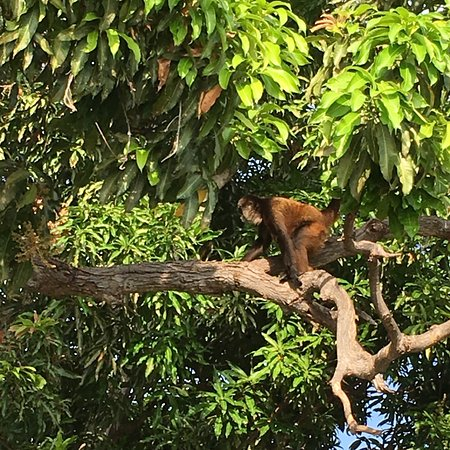Γρανάδα, Νικαράγουα: photo2.jpg