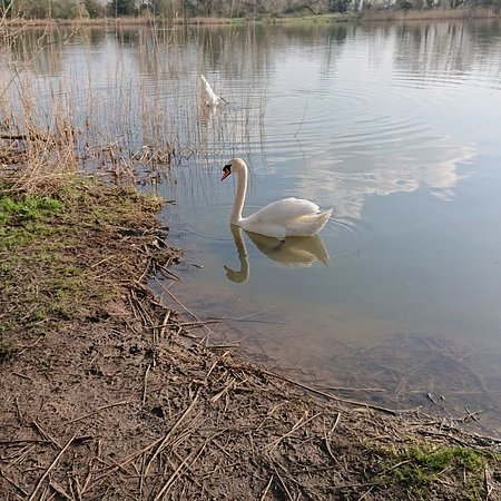 De Vere Cotswold Water Park: IMG_20180415_152733_328_large.jpg