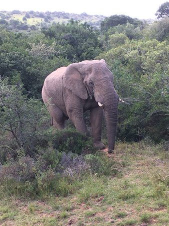 Amakhala Game Reserve, Güney Afrika: from our decking! wow