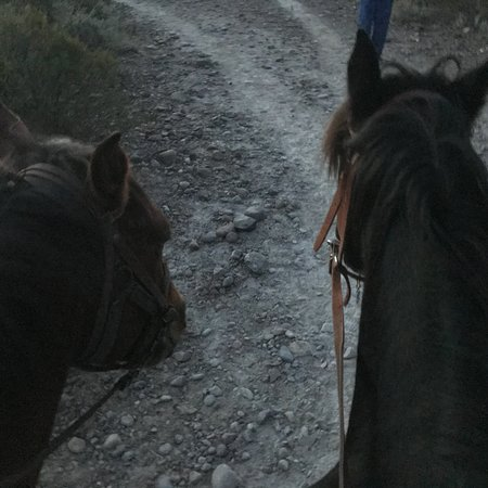 Los Pingos Horse Riding : photo4.jpg