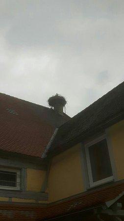 Colmberg, Germany: Störche auf dem Gasthof (hinterer Bauteil, wo die Zimmer sind)