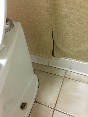 Troy, AL: Wall behind toilet