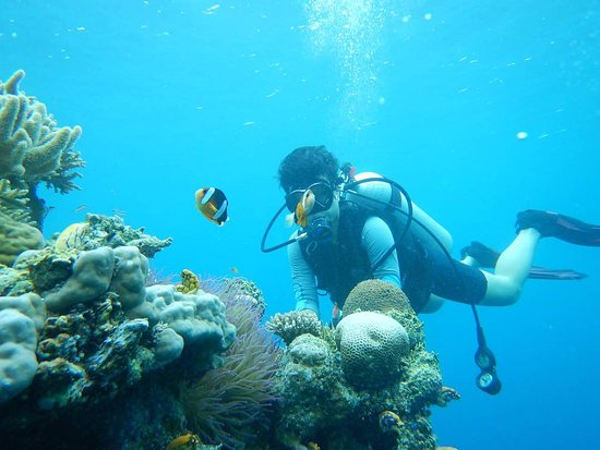 Wakatobi, Indonesia: Group diving & snorkeling