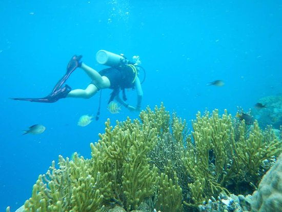 Wakatobi, Indonesien: Group diving & snorkeling