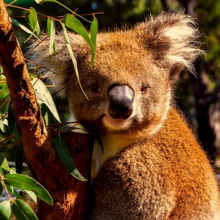 Go Roam Tours: AUSSIE WILDLIFE