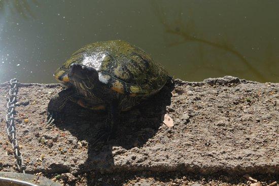 Zoologico de Vallarta: Turtle