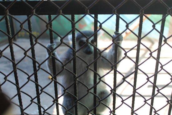 Zoologico de Vallarta: Help