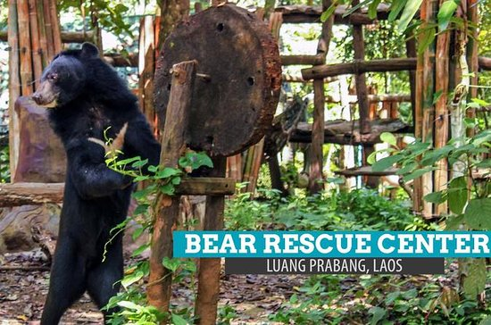 PAK OU CAVES, KUANG SI WATERFALL & BEAR RESCUE CENTER - Luang Prabang...