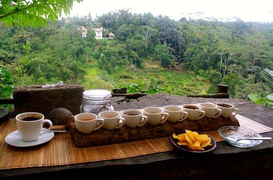 Bali Sightseeing combination Luwak