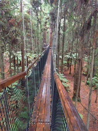 Redwoods, Whakarewarewa Forest: Redwoods Treewalk Rotorua