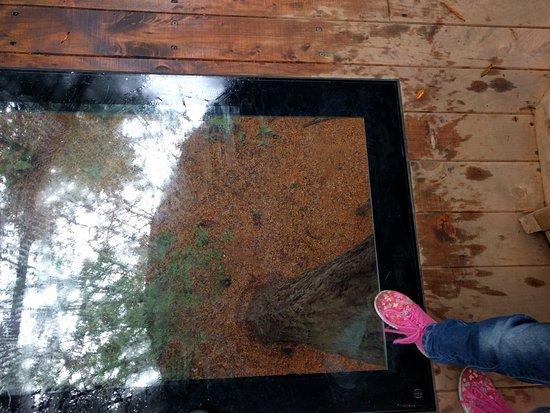 Redwoods, Whakarewarewa Forest: Viewing platform at the Redwoods Treewalk Rotorua