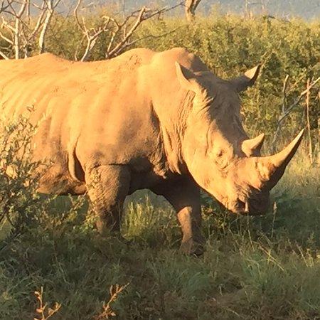 Madikwe Game Reserve, Sør-Afrika: photo0.jpg