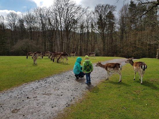 Silz, Deutschland: Rehe streicheln