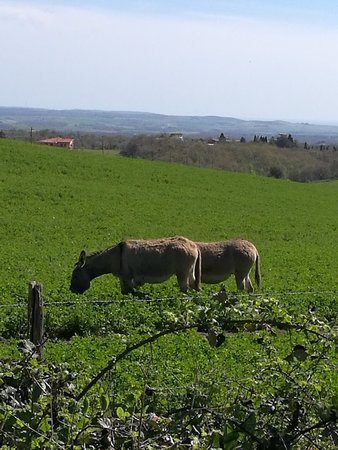 Canino, Italia: Foto