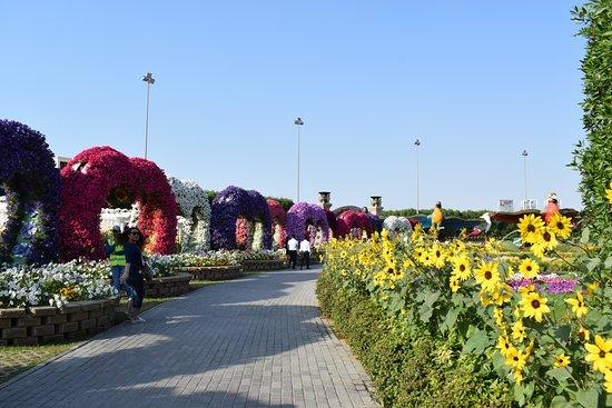 Dubai Miracle Garden: Photo 8